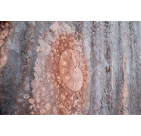 Fossile di ammonite nella pietra tagliata della Cava Buscada