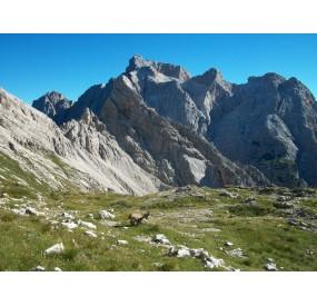 Stembecchi a Forcella Duranno, sullo sfondo la Cima dei Preti, la cima più alta delle Dolomiti Friulane