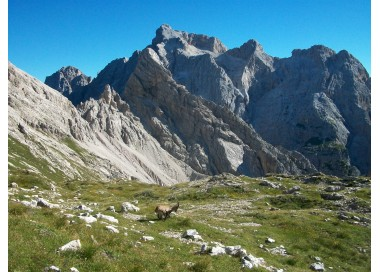 Ibexes at Forcella Duranno, behind Cima dei Preti, the highest peak of the Friulian Dolomites